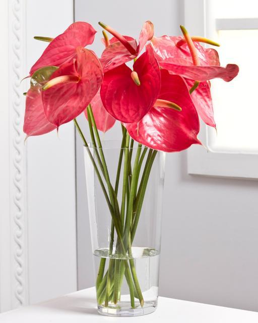 Flamingo Flowers/Colour Choice